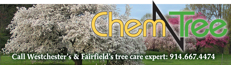 ChemTurf Tree Care service